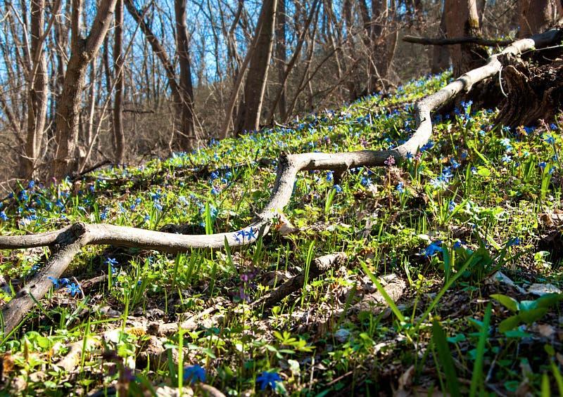 第一朵花在森林里 库存图片