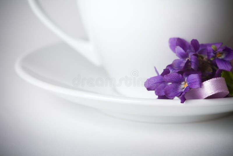 第一朵花紫罗兰 库存照片
