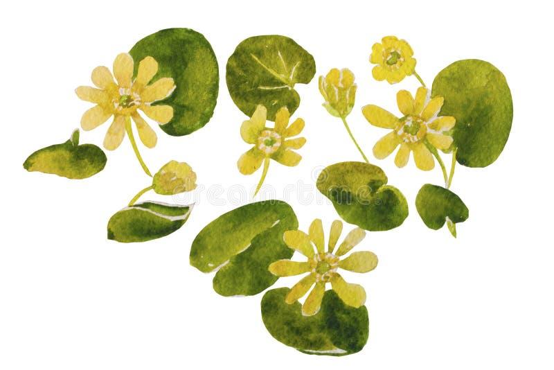 第一朵黄色在白色backgr的花原始的水彩样式 库存例证