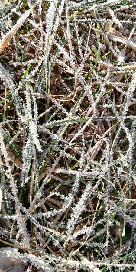 第一秋天霜的踪影在草的 库存图片