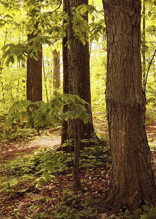 Download 第一站点远见 库存图片. 图片 包括有 约瑟夫, backarrow, 树木繁茂, 森林地, 早晨, 幽谷, 神圣 - 56785