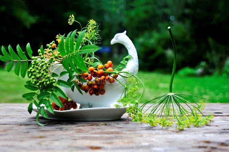 第一花揪花束在庭院里 免版税图库摄影