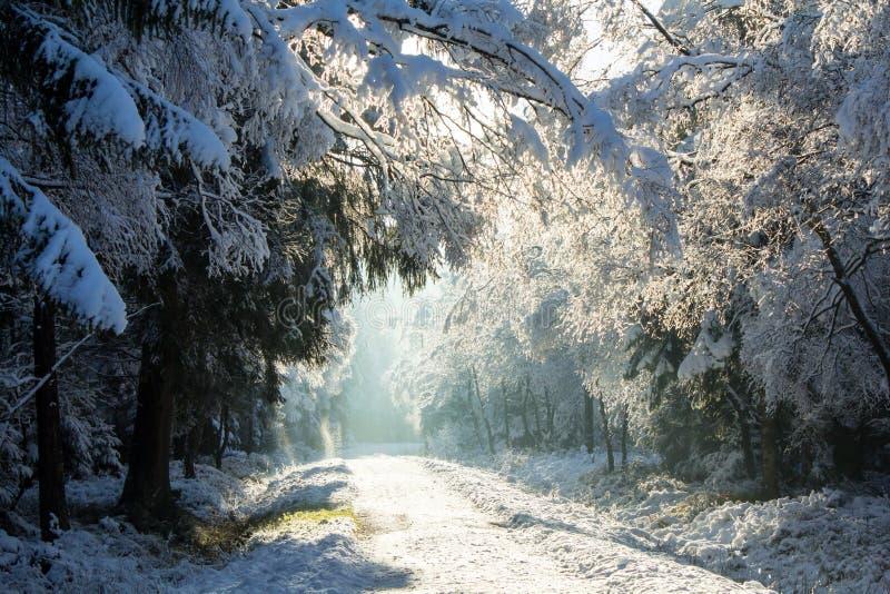 第一雪在冬天 免版税图库摄影