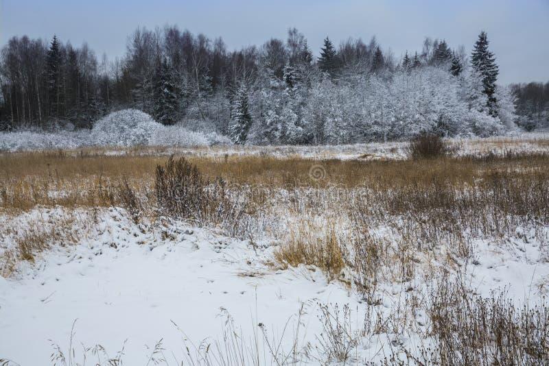 第一雪报道了地面 免版税库存图片