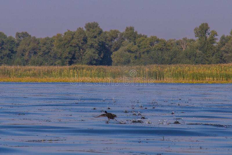 第聂伯河在Kushugum村庄  库存照片