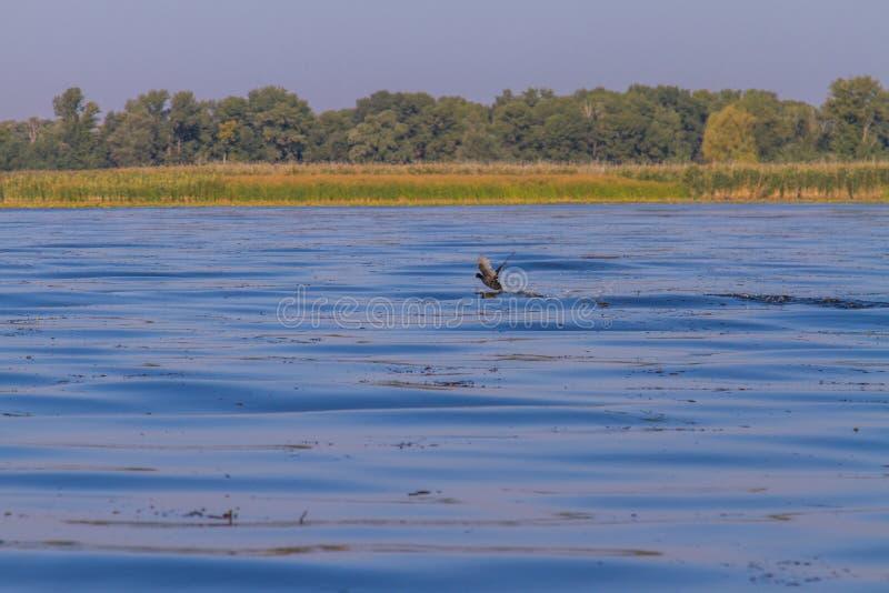 第聂伯河在Kushugum村庄  库存图片