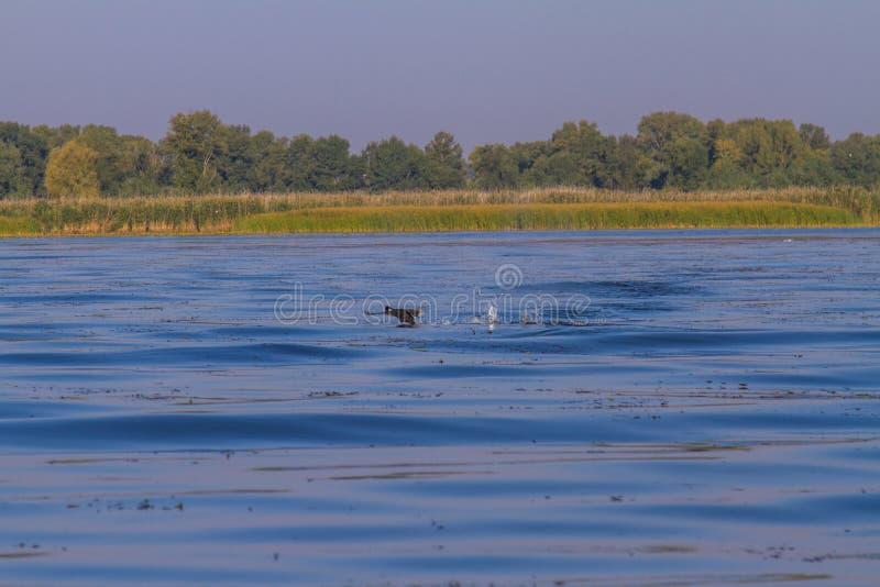 第聂伯河在Kushugum村庄  图库摄影