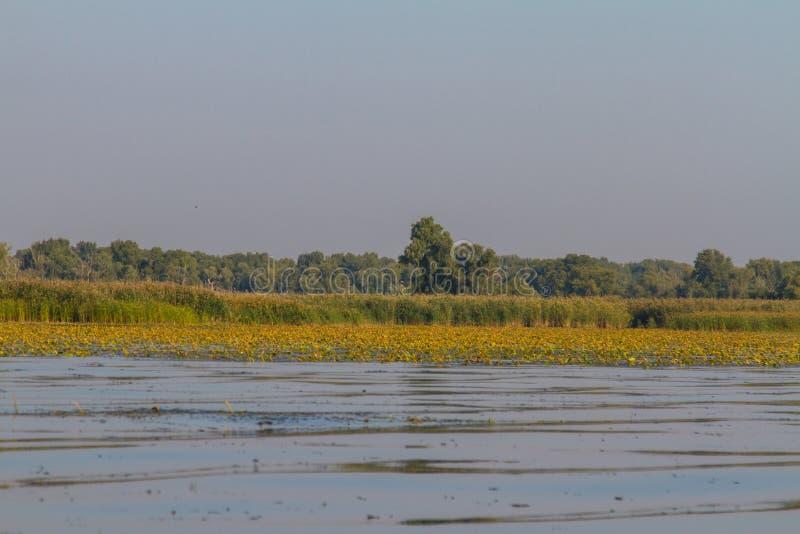 第聂伯河在Kushugum村庄  免版税库存图片