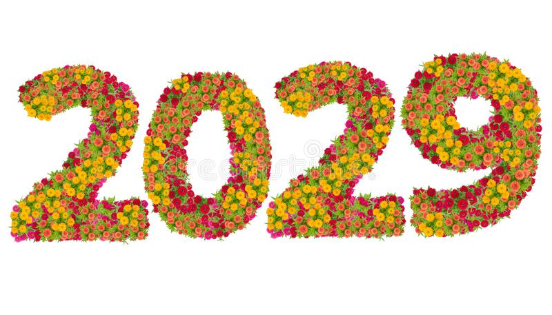 第2029由百日菊属花做了 库存图片