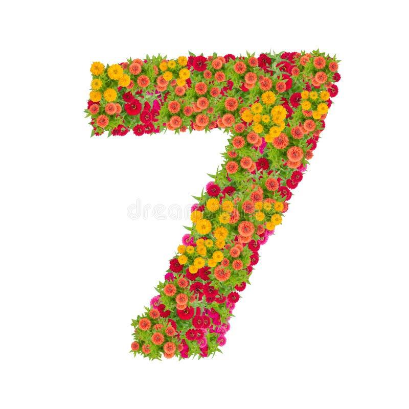 第7由被隔绝的百日菊属花做了在白色背景 免版税库存照片