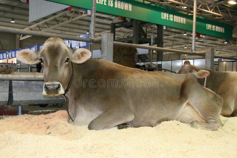 第65个牛牛奶店公平的国际贸易 免版税库存图片