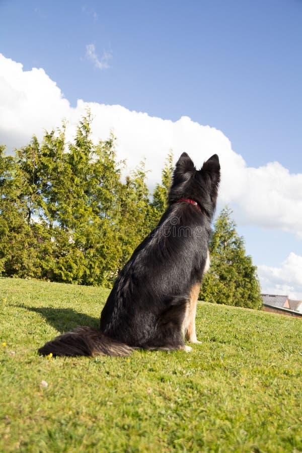 等候从我的大师的指示 狗等待在寻找它的大师的小山顶部 库存图片