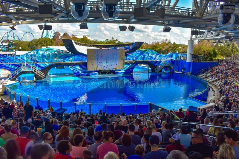等待一个海洋展示的开始与俏丽的虎鲸的人们在Seaworld 1 图库摄影