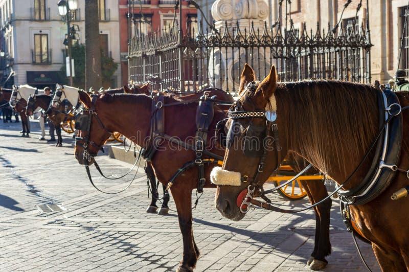 等待他们的车费的马和教练在广场Nueva,塞维利亚 免版税库存照片