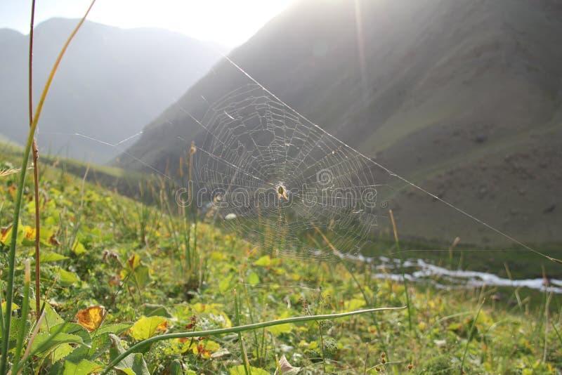 等待受害者的蜘蛛 库存图片