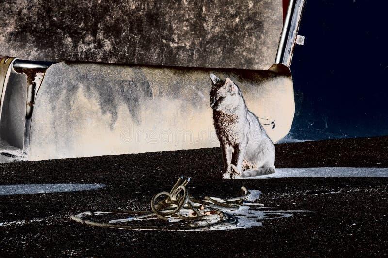 等待在口岸的猫有动机的经验 皇族释放例证