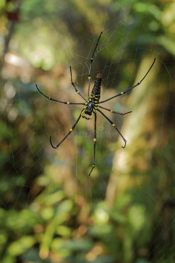 等待在网的一只大蜘蛛牺牲者 库存图片