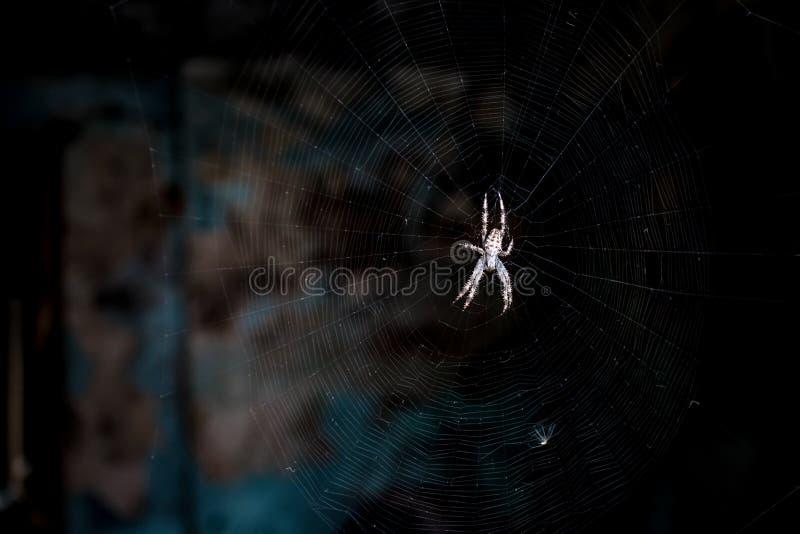 等待它的牺牲者的蜘蛛 库存图片
