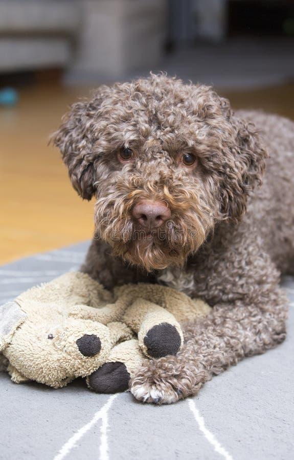 等待布朗的狗使用 免版税库存图片