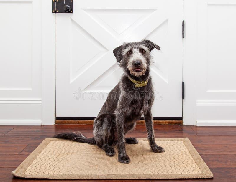 等待由前门的狗 库存照片