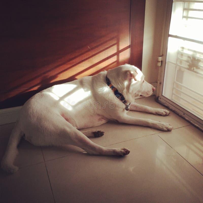 等待由门的狗 图库摄影
