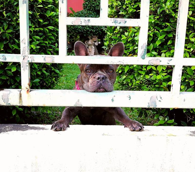 等待的所有者哀伤的狗 免版税库存照片