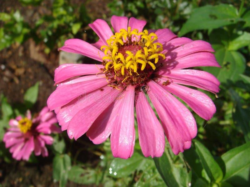 等待的花在生命周期之外的结束 库存照片