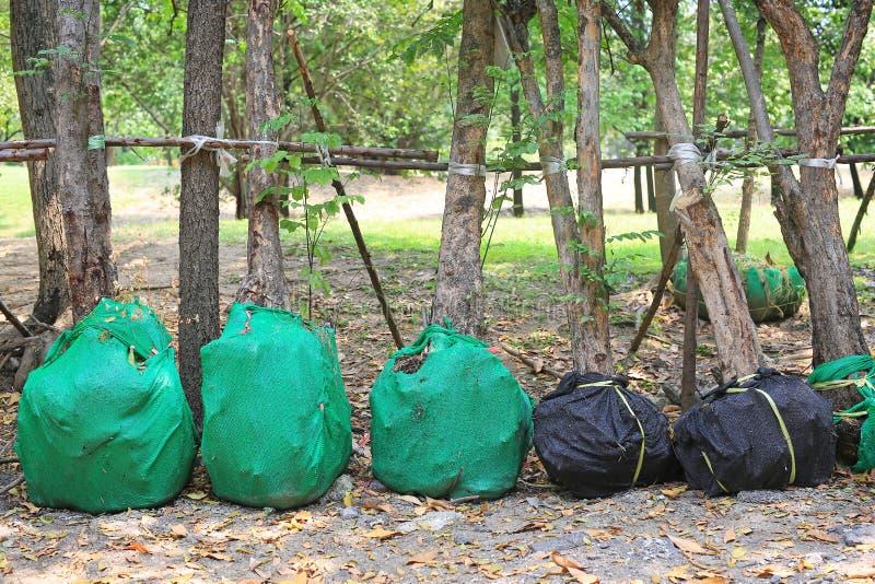 等待种植的多年生植物树在庭院里 包裹支持减少缺乏水 免版税图库摄影