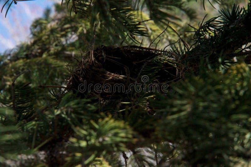 筑巢在树 免版税库存照片