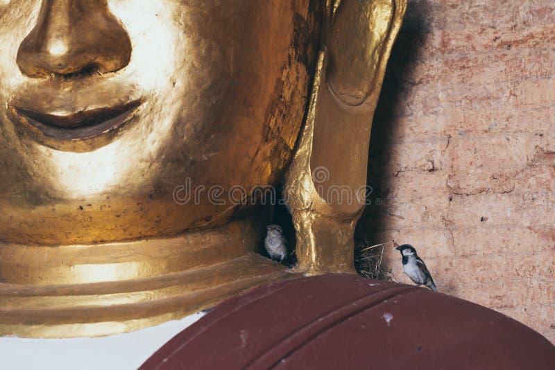 筑巢在菩萨雕象的鸟在蒲甘,缅甸 免版税图库摄影