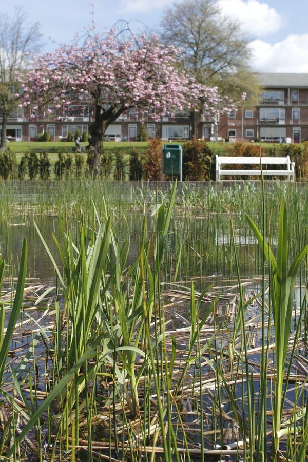 筑成池塘与芦苇在Klarenbeek公园在阿纳姆 免版税库存照片