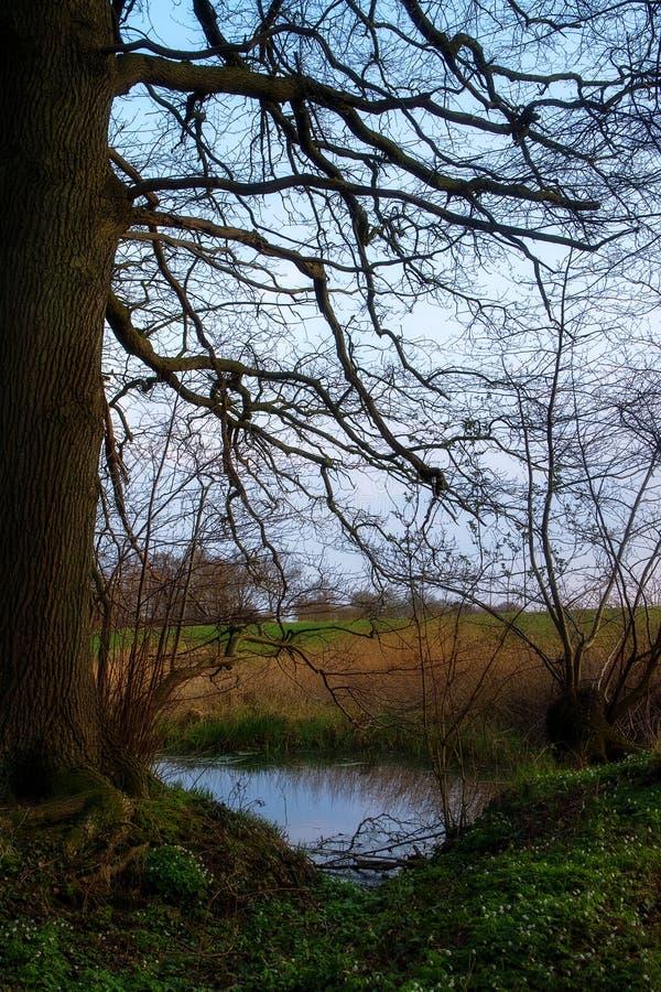 筑成池塘在森林、早期的春天、第一绿色和木头a边缘  免版税库存照片