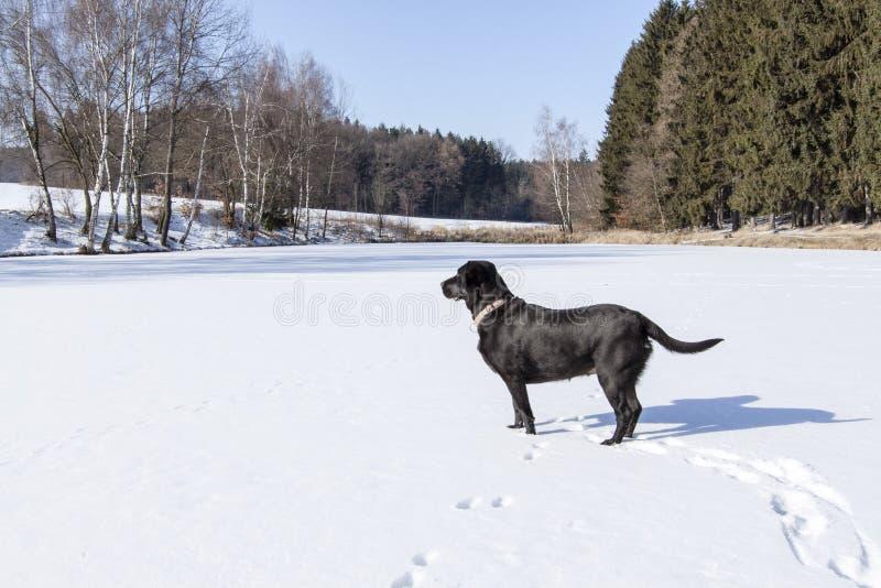 筑成池塘在雪下在冬天和沮丧 库存图片