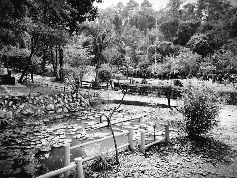 筑成池塘瓣 植物群和动物区系是这个地方秀丽  对它的最好的春天的自然和花 免版税图库摄影