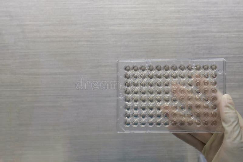 筛选由MTT分析用试样的细胞细胞毒性的特写镜头图象在微浓度测定板材 Mtt用于学习细胞生活能力措施 库存图片