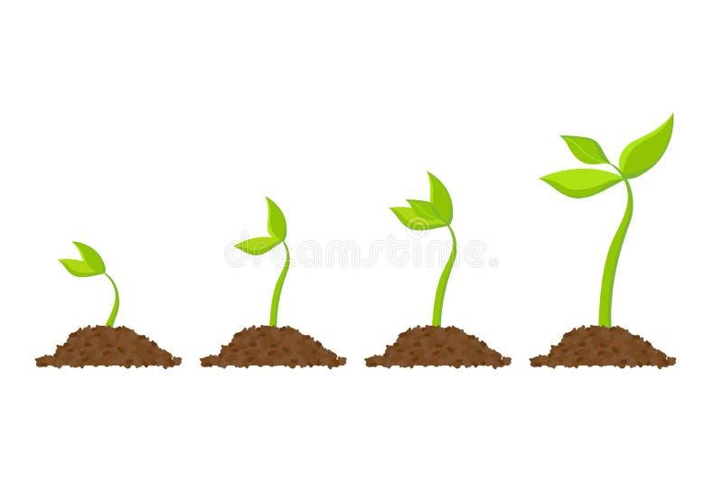 简单的发芽种子图画 新芽,植物,树生长农业象 也corel凹道例证向量 皇族释放例证