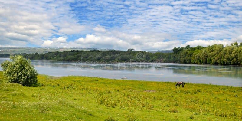 简单的河、草甸和洪泛区森林 库存图片