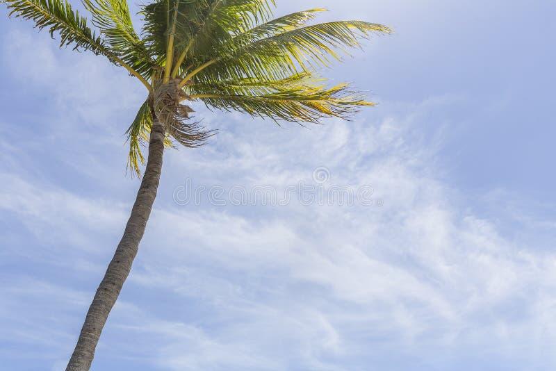 简单的热带天在天堂 图库摄影