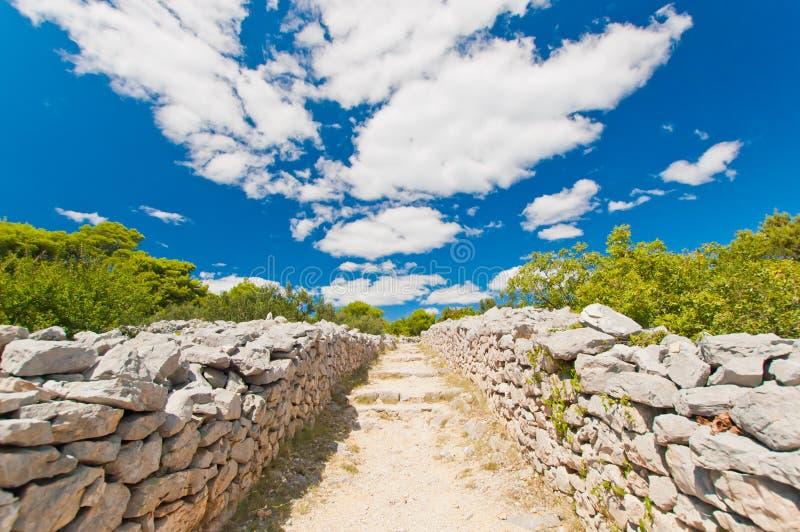简单的石路在橄榄色的果树园在克罗地亚 免版税图库摄影