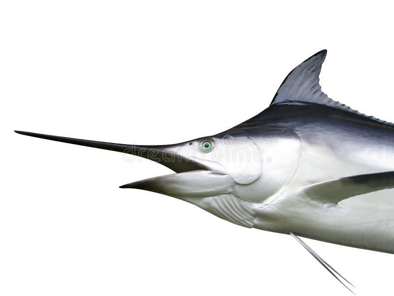 细索-箭鱼 免版税库存照片