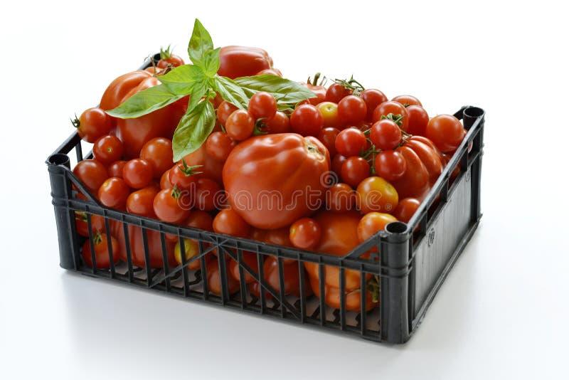 箱与蓬蒿叶子1的蕃茄 库存照片