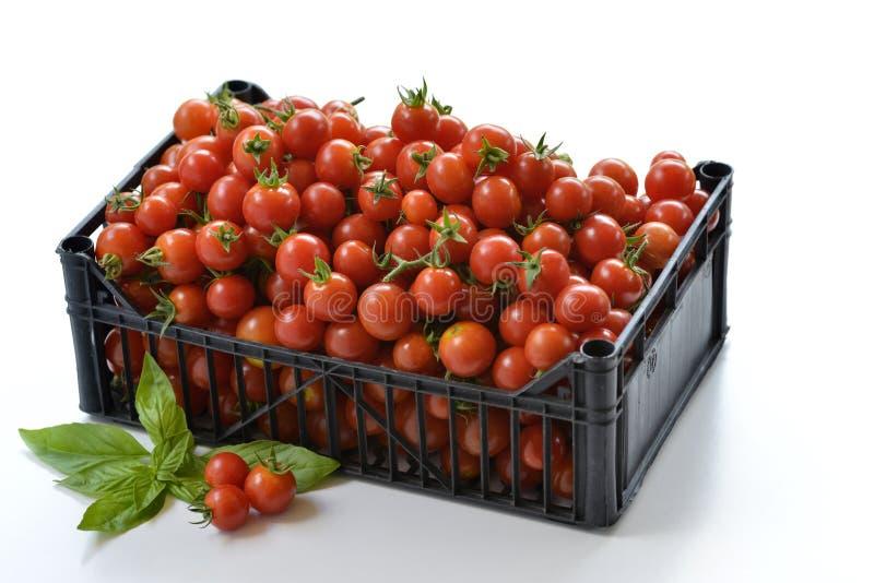箱与蓬蒿叶子2的蕃茄 库存照片