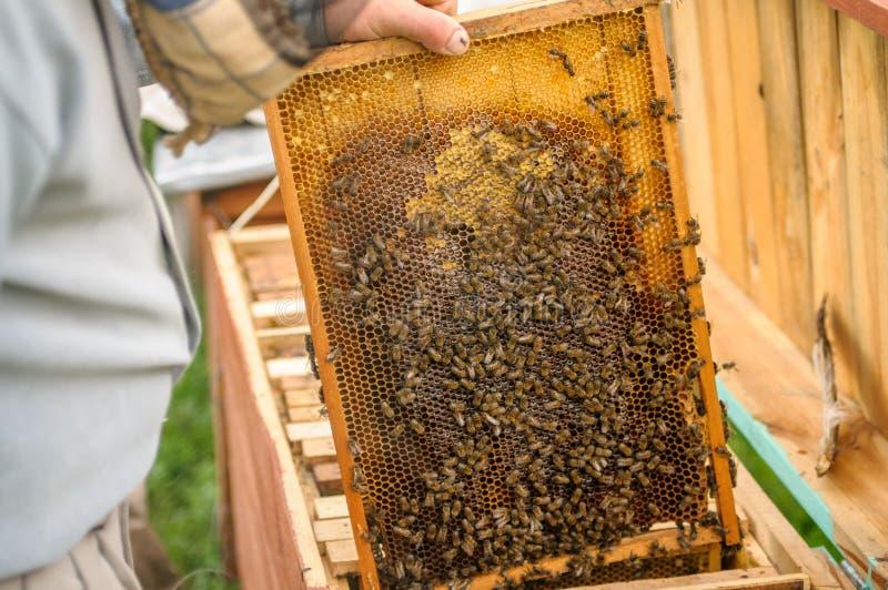 箱子有蜂的和盖用蜡和蜂蜜 免版税库存图片