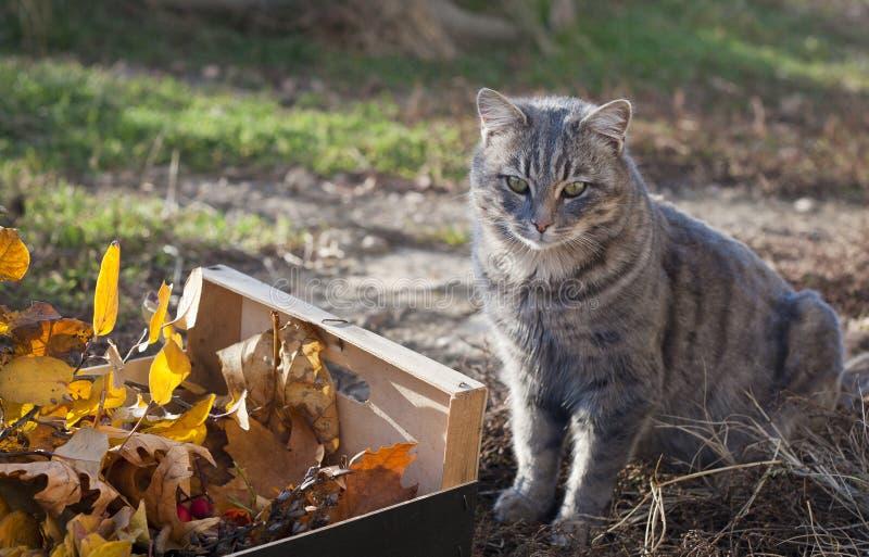 箱子秋叶和猫 库存图片