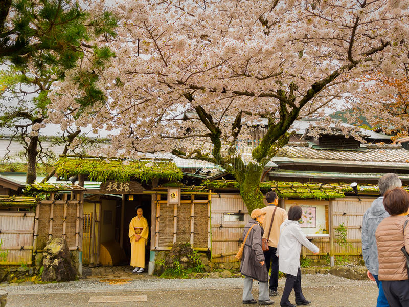 箱根,日本- 2017年7月02日:进来和享用在hanami公园的未认出的人民在樱花季节期间 免版税库存照片