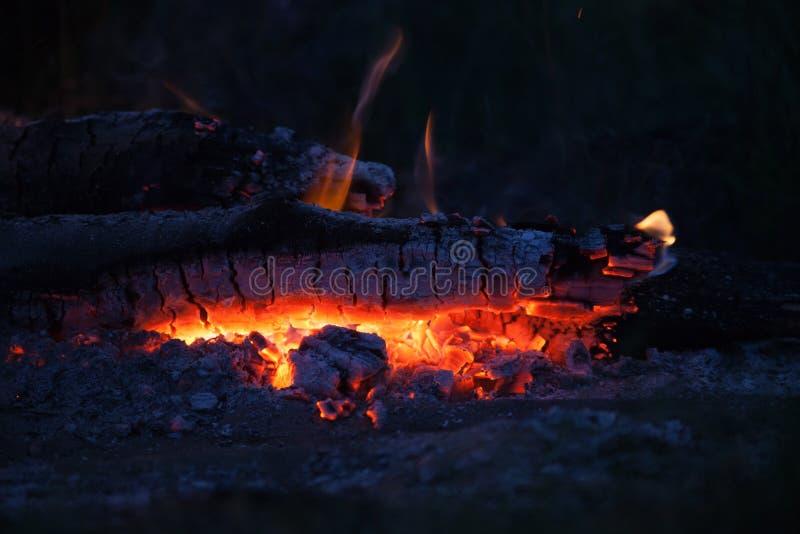 篝火在草甸在夏夜里 图库摄影
