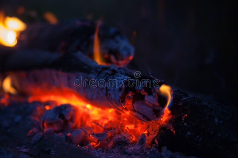 篝火在草甸在夏夜里 库存图片