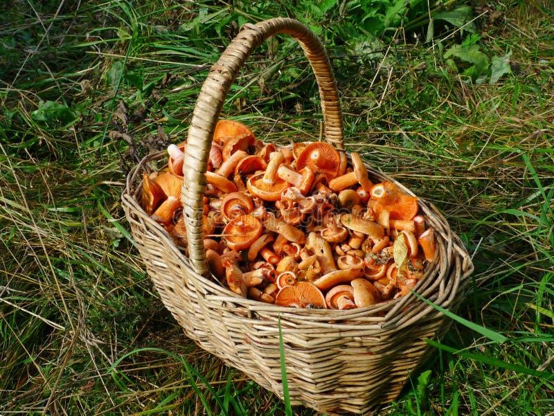 篮子充分的蘑菇 库存图片