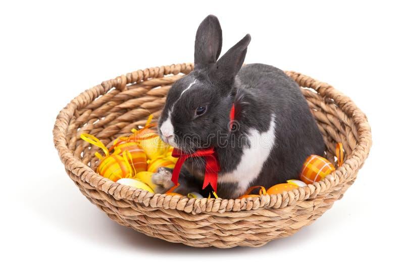 篮子兔宝宝复活节查出的白色 免版税库存图片