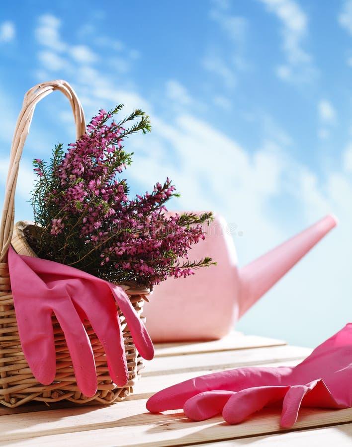 篮子室内植物 免版税库存图片